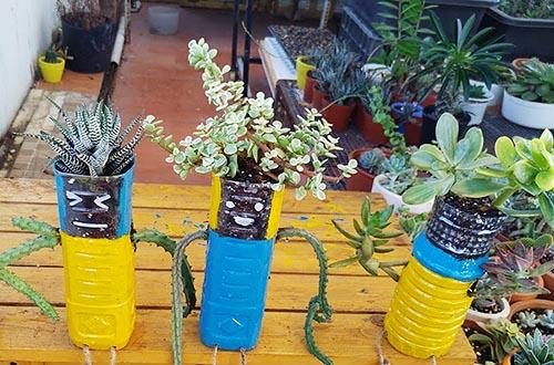 Hướng dẫn cách trồng xương rồng bằng chai nhựa